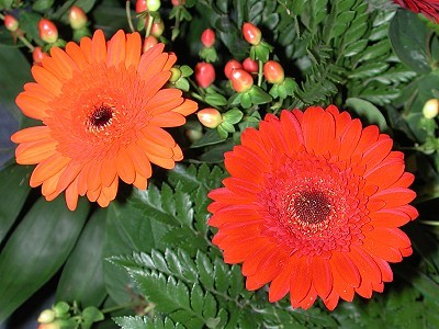 orangered: